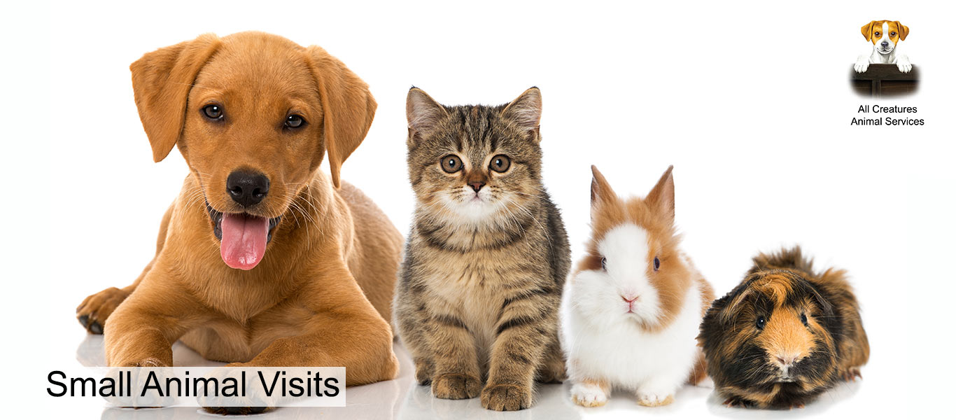 Home visits for pets with All Creatures Animal services